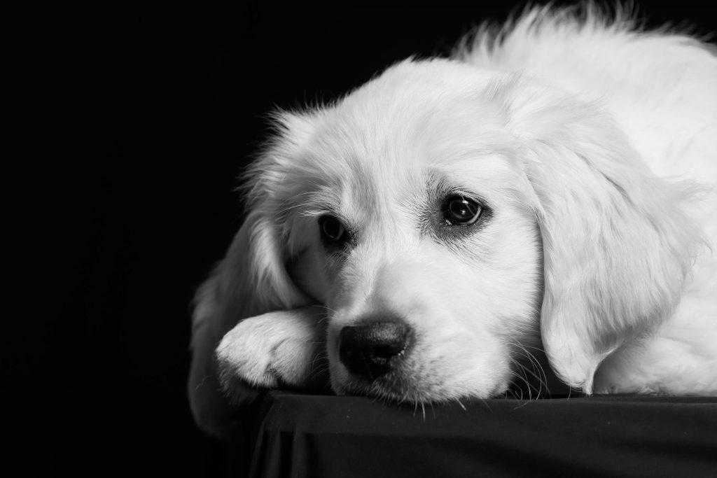 Monika Kessler Tierfotograf Vorarlberg zeigt Tierbilder mit Hunden, Katzen und Pferde
